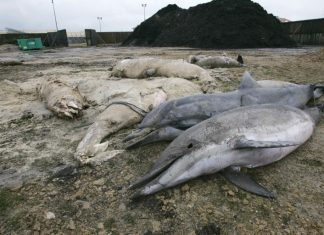 france dolphin death, dolphins die atlantic coast france, france atlantic dolphin die-off