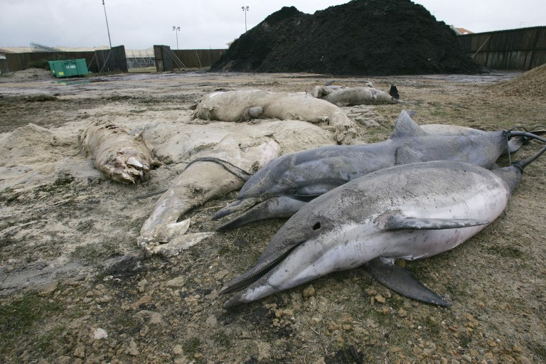 france dolphin death, dolphins die atlantic coast france, france atlantic dolphin die-off