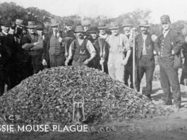 mysterious aussie mouse plague