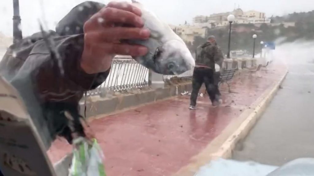 people collect fish blown out of sea in Malta, people collect fish blown out of sea in Malta video, people collect fish blown out of sea in Malta picture