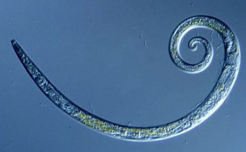 worms siberia revived, Worms Frozen for 42,000 Years in Siberian Permafrost Wriggle to Life