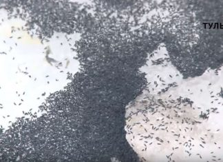Insects fall from the sky during severe blizzard in Russia, Insects fall from the sky during severe blizzard in Russia march 2019, Insects fall from the sky during severe blizzard in Russia video