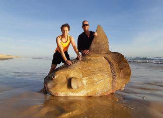 sunfish south australia beach, sunfish south australia beach pictures, sunfish south australia beach video