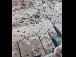 black scarabs invasion saudi arabia iraq, black scarabs invasion saudi arabia iraq video, black scarabs invasion saudi arabia iraq pictures, black scarabs invasion saudi arabia iraq april 2019
