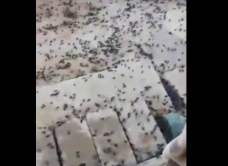 black scarabs invasion saudi arabia iraq, black scarabs invasion saudi arabia iraq video, black scarabs invasion saudi arabia iraq pictures, black scarabs invasion saudi arabia iraq april 2019