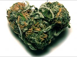 marijuana sex, Marijuana may improve women's enjoyment of sex