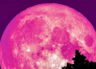 pink full moon april, pink full moon april picture, pink full moon april video, pink full moon april 19 2019