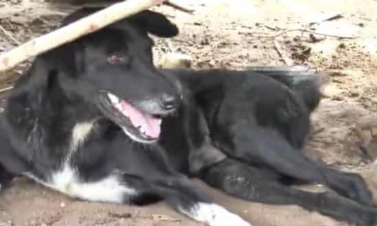 Disabled dog rescues baby boy buried in sand by teenage mother in Thailand, Disabled dog rescues baby boy buried in sand by teenage mother in Thailand photo, Disabled dog rescues baby boy buried in sand by teenage mother in Thailand may 2019