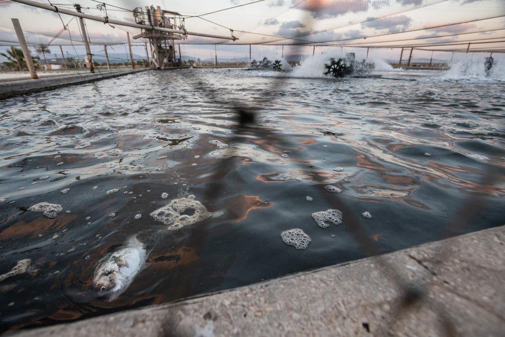 eight million salmon killed norway farm in a week