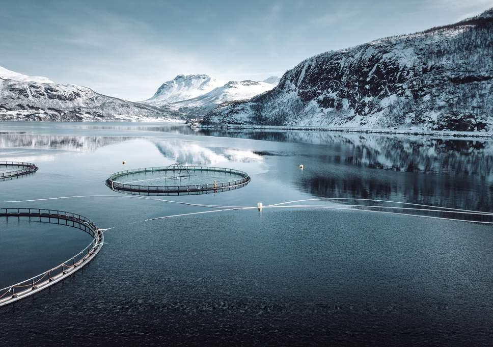eight million salmon killed norway farm