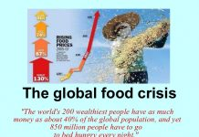 Global Food Crisis, The Global Food Crisis, Global Food Crisis widespread food crisis, food crisis around the world