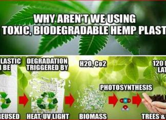 hemp plastic is the future of plastic