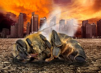Nature's Dangerous Decline 'Unprecedented'; Species Extinction Rates 'Accelerating'