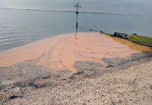 Dead fish wash up on Kent beaches where sea turned orange striking fears water in area is toxic