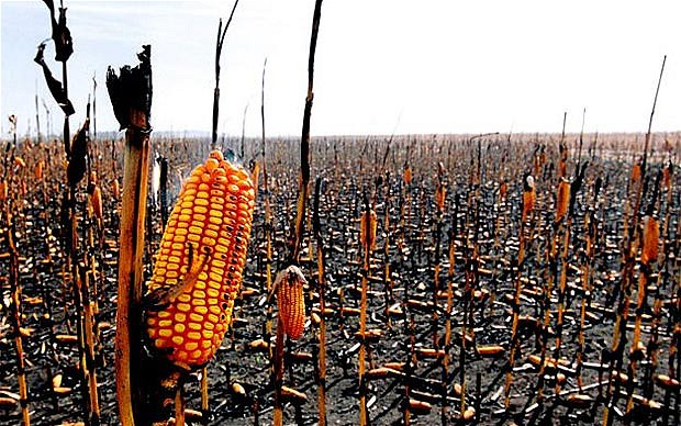 Food prices set to rise after US cuts crop stock forecasts, us food crisis foodprice rise usa 2019