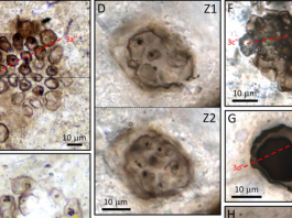 Exceptionally preserved fossilized remains of 1 billion-year-old cells discovered in ancient lake in Scotland, Exceptionally preserved fossilized remains of 1 billion-year-old cells discovered in ancient lake in Scotland video, Exceptionally preserved fossilized remains of 1 billion-year-old cells discovered in ancient lake in Scotlandpicture, Exceptionally preserved fossilized remains of 1 billion-year-old cells discovered in ancient lake in Scotland news, Exceptionally preserved fossilized remains of 1 billion-year-old cells discovered in ancient lake in Scotland june 2019