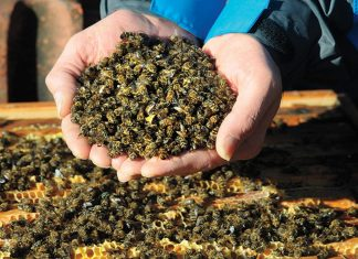 This winter has seen one of the biggest honey bee die-offs in the US on record, with 37 percent of managed honey bee colonies lost from October 2018 to April 2019.