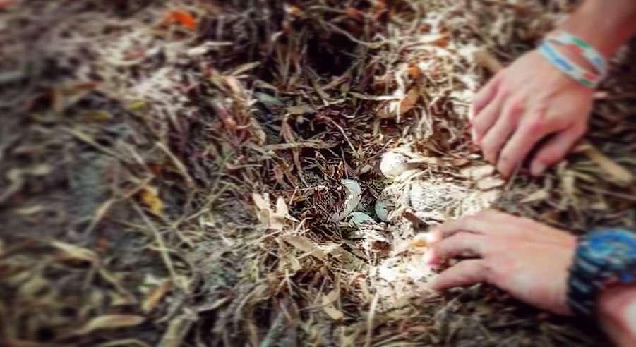 albino alligator eggs florida, albino alligator eggs florida video, albino alligator eggs florida picture, albino alligator eggs florida june 2019