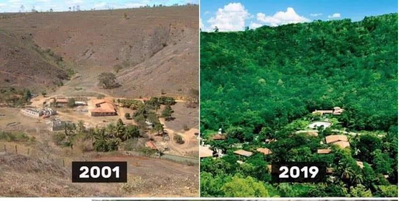 This Couple Spent 20 Years Replanting a Destroyed Rainforest in Brazil and the Results Are Just Amazing, brazil couple replants rainforest salgado, brazil couple replants rainforest salgado video, brazil couple replants rainforest salgado february 2020