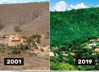 couple replants millions of trees in Brazil, couple replants millions of trees in Brazil video, couple replants millions of trees in Brazil picture