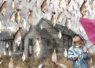animal rain, fish rain, animal rain phenomenon, animal rain mystery