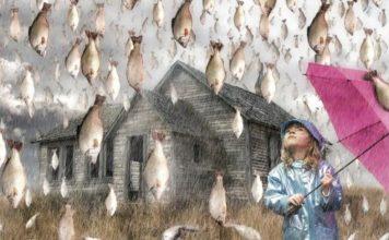 animal rain, fish rain, animal rain phenomenon, animal rain mystery