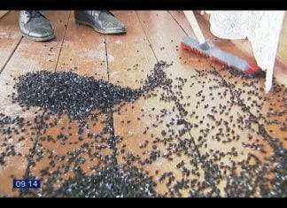 Terrifying fly apocalypse russia, Terrifying fly apocalypse russia video, Terrifying fly apocalypse russia pictures