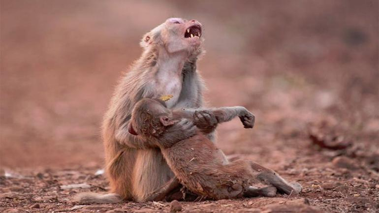 india heatwave kills 92 people monkeys and birds fall from the sky