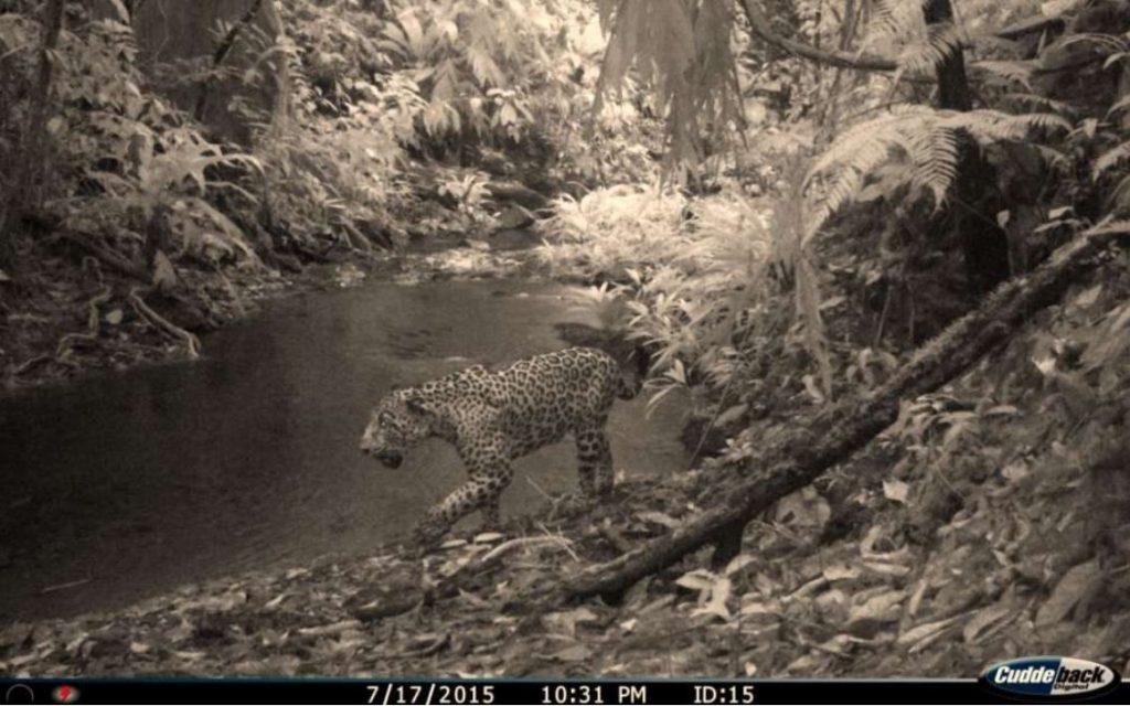 "lost city honduras biodiversity, new species honduras rainforest lost city, Brand New Species And Animals Long-Thought Extinct Found Near ""Lost City"" In Honduras"