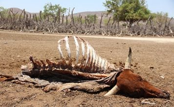 The drought in Namibia is so bad, national parks have to auction wild animals