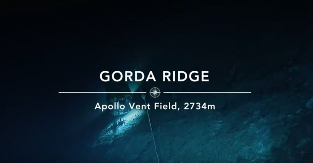newly discovered apollo vent field off oregon, newly discovered apollo vent field off oregon video, newly discovered apollo vent field off oregon picture