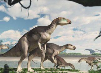 opal bones skeleton dinosaur australia