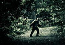 pennsylvania bigfoot, pennsylvania bigfoot sightings, pennsylvania bigfoot sightings increase