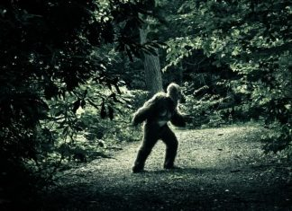 pennsylvania bigfoot, pennsylvania bigfoot sightings, pennsylvania bigfoot sightings increase