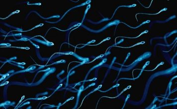 Sperm survives microgravity, Microgravity sperm experiment suggests babies can be born in space, scientists say