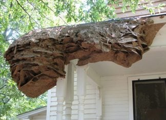 giant yellow jacket nests alabama, giant yellow jacket nests alabama 2019, giant yellow jacket nests alabama danger, giant yellow jacket nests alabama video, giant yellow jacket nests alabama july 2019