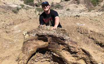 triceratops skull north dakota, Harrison Duran, a fifth-year biology student obsessed by dinosaurs, discovered a Triceratops skull during a paleontology dig in North Dakota
