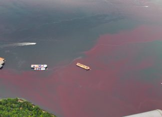 vancouver red water, vancouver red tide, vancouver red tide pictures, vancouver red tide videos, vancouver red tide july 2019