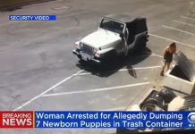 Coachella woman gets jail for dumping puppies in trash, California woman gets jail for dumping puppies in trash