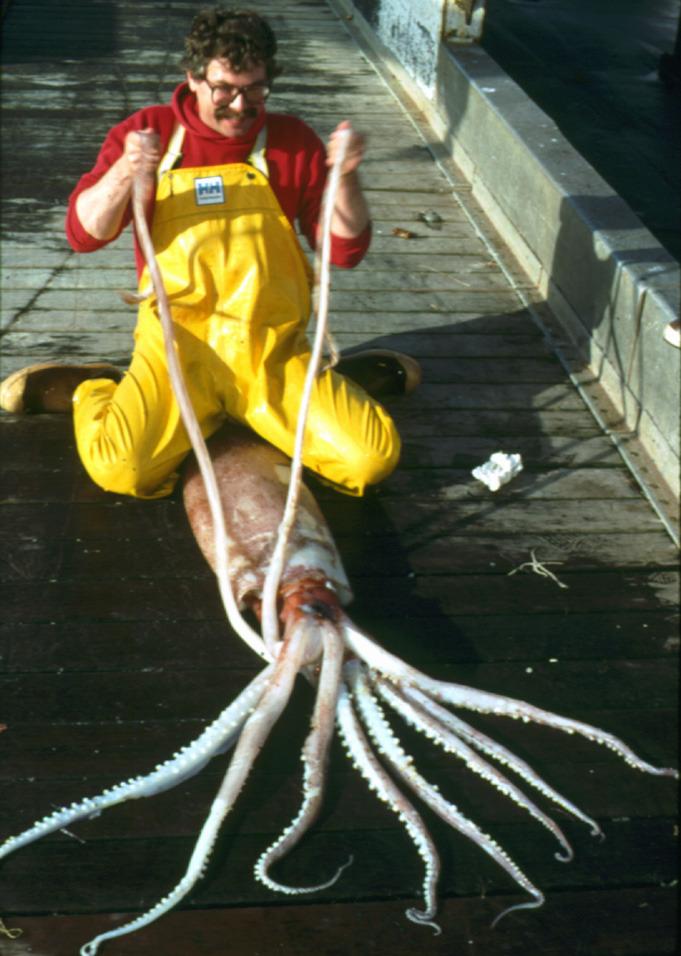 Deep-sea gigantism, abyssal gigantism, fukushima gigantism, fukushima Deep-sea gigantism