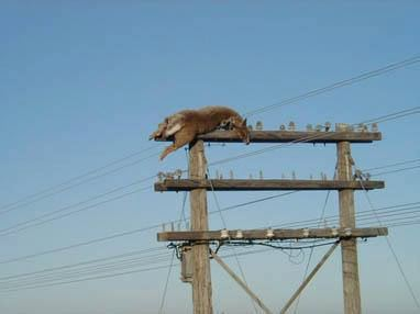 How did that deer climb on top of this electrical pole, deer electrical pole, deer on top power pole