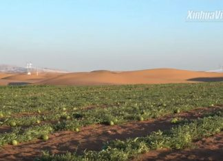 Scientists turn desert into oasis and fertile soil, desert turns into oasis, desert turns into oasis video