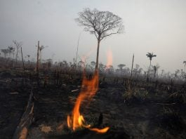 Wildfires scorch Africa but world's media stay focused on Brazil's blazes