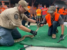 Florida Fish and Wildlife offers youth python hunting program, how to become a man in Florida
