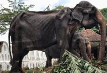 living elephant skeleton, living elephant skeletonpictures, living elephant skeleton video
