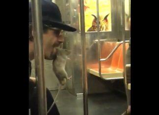 strange subway creatures, strange subway creatures video