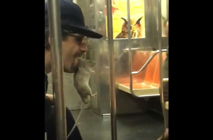 strange subway creatures, strange subway creatures video