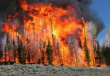 terrifying sound raging wildfire, terrifying sound raging wildfire video, terrifying sound raging wildfire august 2019