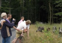 wild boar mystery death netherlands, wild boar mystery death netherlands video, wild boar mystery death netherlands phenomenon, wild boar mystery death netherlands illness, wild boar mystery death netherlands poison