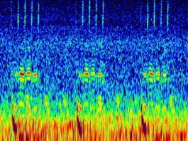 Strange sounds recorded in Cook Strait